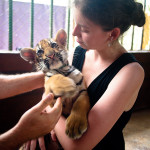 Playing with tigers and elephants: Thailand Adventure Guide